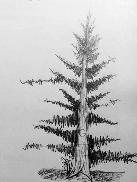Here is a Doug fir I drew once. It may or may not look anything like any Doug fir you've ever seen.